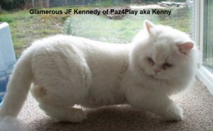 Glamerous JF Kennedy of Paz4Play aka Kenny