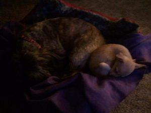 Buster & Chloe