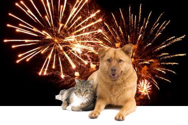 Image result for Fireworks and pets