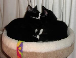 Holly & Max