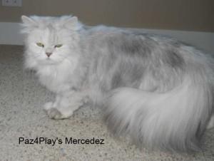 Paz4Play's Mercedez.JPG