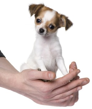 In Home Veterinary Services | Salem Oregon