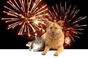 Firework Safety and Pets
