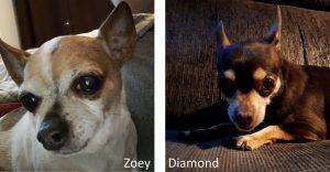 Zoey & Diamond