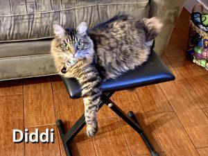 Diddi-The-Cat
